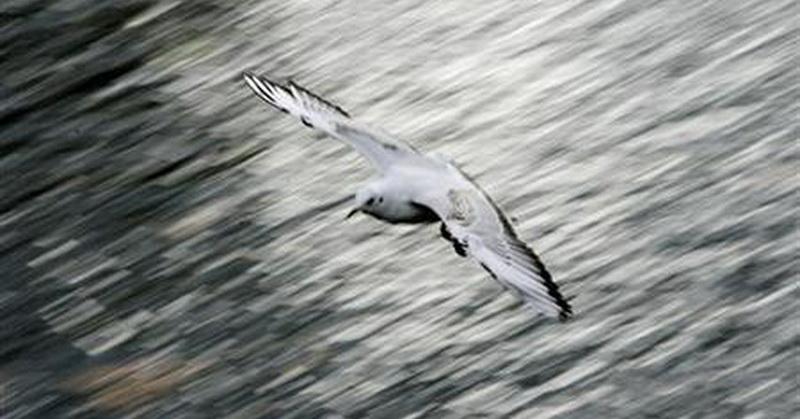 https: img-k.okeinfo.net content 2018 04 11 56 1885282 ternyata-bulu-burung-laut-tak-akan-basah-walau-terkena-air-3MleuPwgv2.jpg