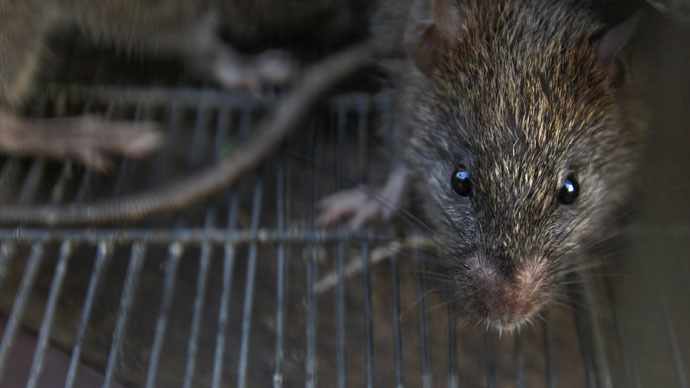 https: img-k.okeinfo.net content 2018 04 13 18 1886480 540-kilogram-ganja-hilang-polisi-salahkan-tikus-yang-kecanduan-7bfWJV60Is.jpg