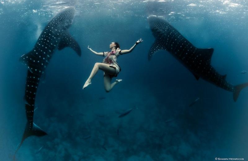 https: img-k.okeinfo.net content 2018 04 19 406 1888651 foto-foto-menakjubkan-model-cantik-menari-dengan-hiu-paus-di-bawah-laut-g0BQC2uZj7.jpg