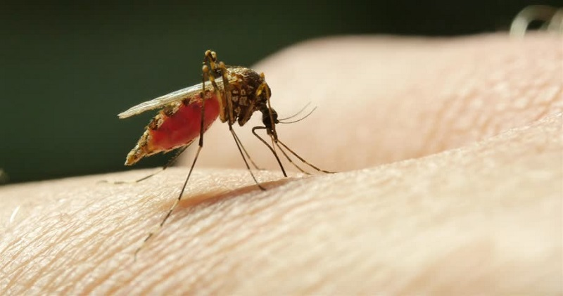 https: img-k.okeinfo.net content 2018 04 23 481 1890379 jelang-hari-malaria-sedunia-who-dan-kemenkes-luncurkan-kampanye-ready-to-beat-malaria-1s4Dgyyjeh.jpg