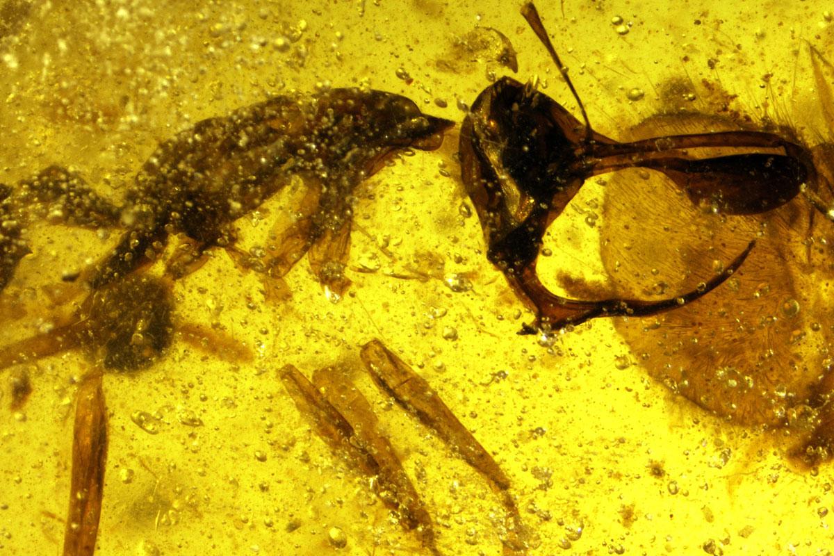 https: img-k.okeinfo.net content 2018 05 02 406 1893487 ditemukan-bentuk-semut-neraka-purbakala-mirip-setan-lihat-foto-fotonya-bikin-merinding-wL8fEYCcWQ.jpg