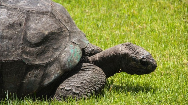 https: img-k.okeinfo.net content 2018 05 25 196 1902584 yuk-kenalan-sama-jonathan-kura-kura-tertua-di-dunia-yang-umurnya-186-tahun-7yQvbED36p.jpg