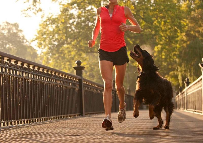 https: img-k.okeinfo.net content 2018 06 04 196 1906289 wajib-baca-4-hal-ini-perlu-kamu-terapkan-sebelum-jogging-bareng-anjing-kesayangan-9s4C4blchm.jpg