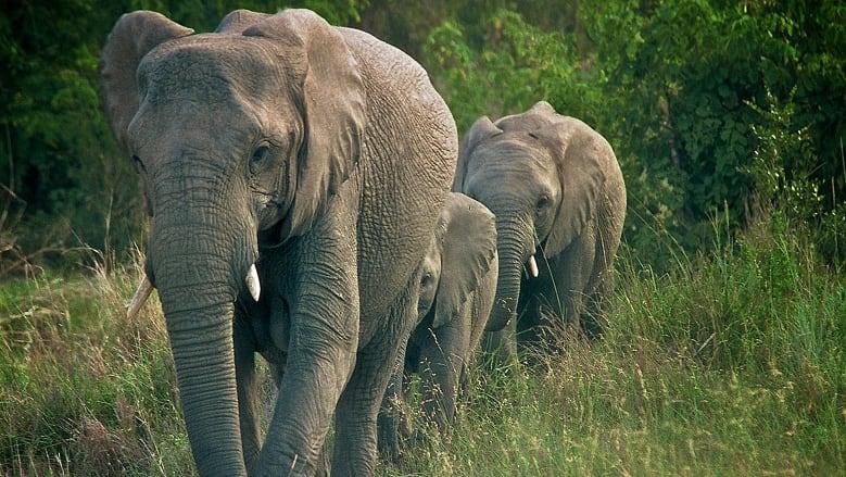https: img-k.okeinfo.net content 2018 06 11 406 1909229 peduli-keberlangsungan-hidup-gajah-badak-bocah-7-tahun-ini-berhasil-ubah-dunia-14aj3EYfV0.jpg