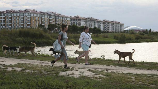 https: img-k.okeinfo.net content 2018 06 14 406 1910338 sambut-piala-dunia-2018-beberapa-kota-di-rusia-bunuh-anjing-ratusan-anjing-liar-di-7-kota-tjhZ6bvEVF.jpg