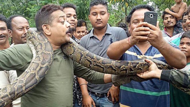 https: img-k.okeinfo.net content 2018 06 19 18 1911477 swafoto-dengan-ular-piton-raksasa-petugas-penjaga-hutan-dililit-l9IBA7Xh13.jpg