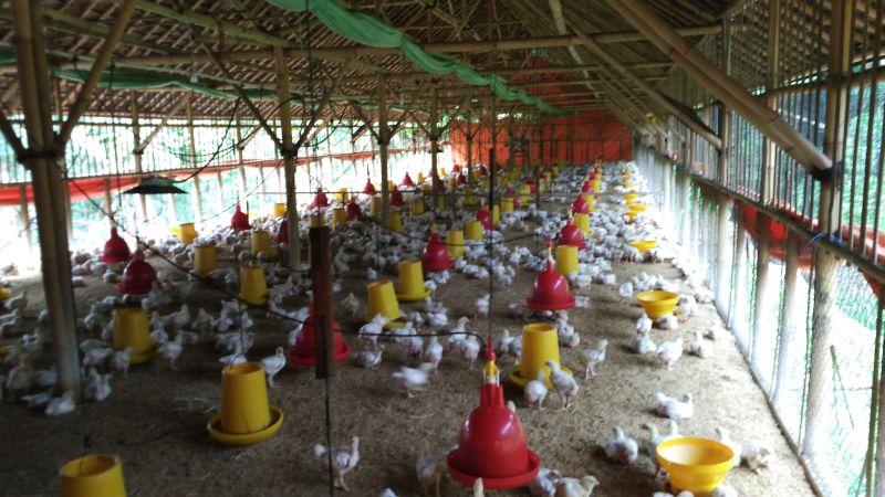 https: img-k.okeinfo.net content 2018 07 04 320 1917719 kesehatan-dan-keamanan-hewan-jadi-tantangan-perluas-ekspor-produk-peternakan-OSUPEcMRRr.jpg