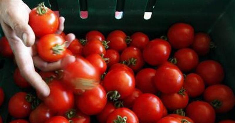 https: img-k.okeinfo.net content 2018 07 10 56 1920199 manfaatkan-tomat-mahasiswa-ini-bikin-baterai-ramah-lingkungan-iAo5JJhNaN.jpg