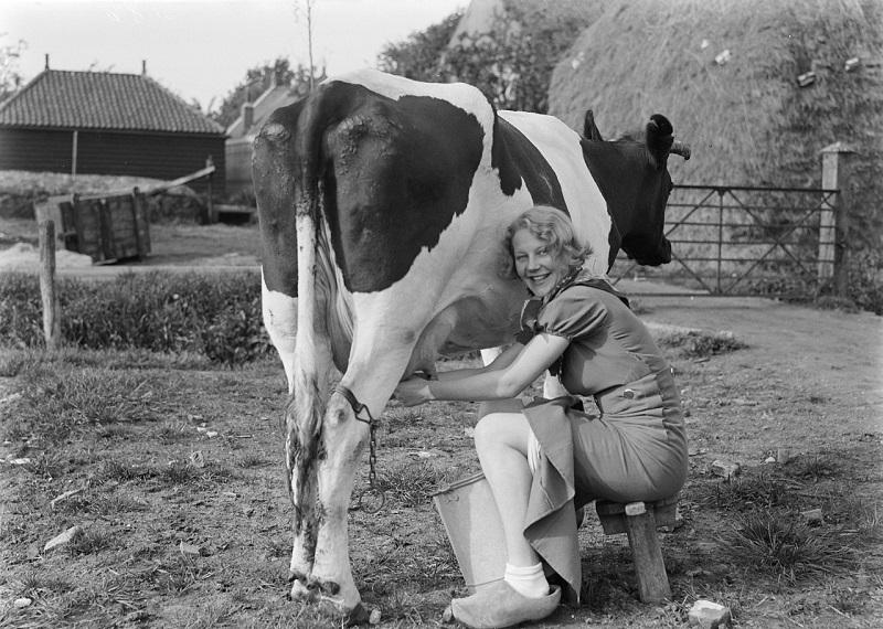 https: img-k.okeinfo.net content 2018 07 13 194 1922129 alasan-dutch-lady-identik-dengan-pemerah-susu-dalam-iklan-iklan-OSFKUazZZC.jpg