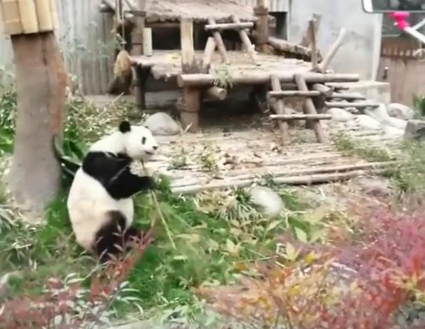 https: img-k.okeinfo.net content 2018 07 14 406 1922224 viral-video-panda-gembul-yang-lagi-kungfu-bikin-gemas-dan-lucu-banget-giv1lxns5P.jpg