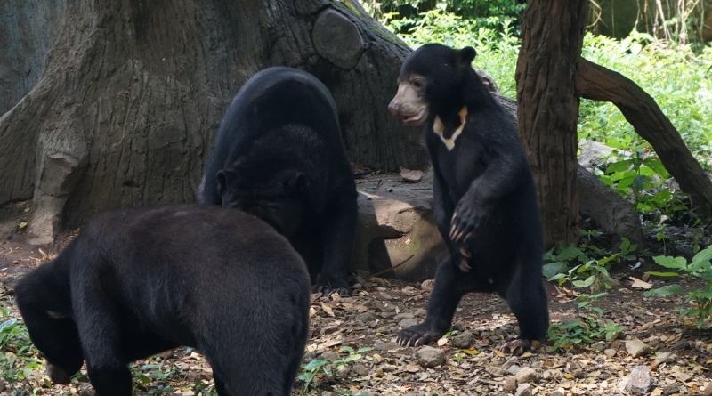 https: img-k.okeinfo.net content 2018 08 12 340 1935562 tim-gabungan-bekuk-kawanan-pemburu-beruang-madu-di-lampung-e0QaNCLMxh.jpg