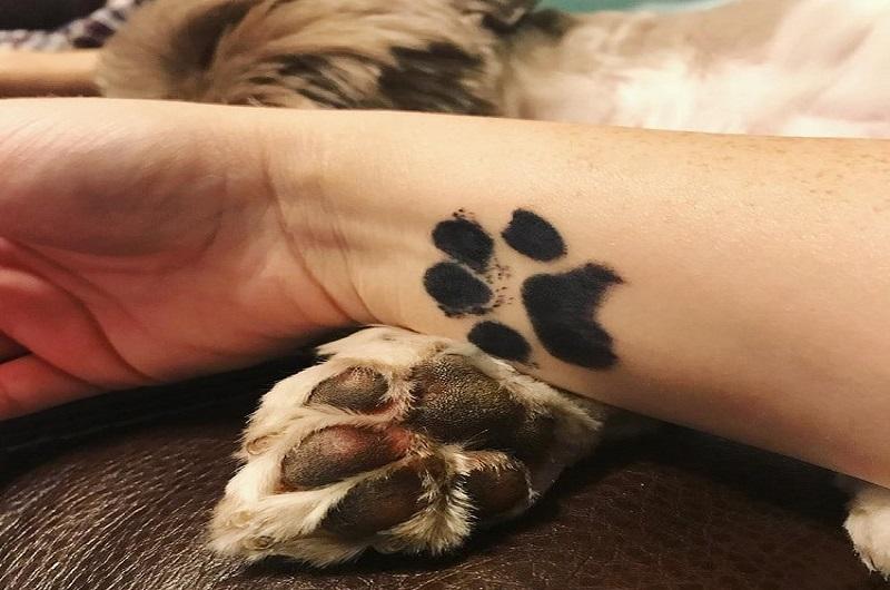 https: img-k.okeinfo.net content 2018 08 20 196 1938749 tren-tato-telapak-kaki-hewan-peliharaan-di-tubuh-pemiliknya-bikin-so-sweet-banget-DsFNDYtO5y.jpg