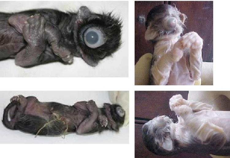 https: img-k.okeinfo.net content 2018 09 14 196 1950450 kumpulan-hewan-lahir-dengan-kondisi-langka-hanya-punya-satu-mata-KdWCLFBnvb.jpg