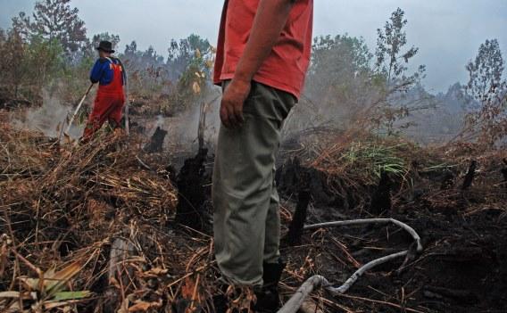 https: img-k.okeinfo.net content 2018 10 14 525 1963956 14-hari-terbakar-1-310-hektare-lahan-di-gunung-ciremai-hangus-78d5olgTjv.jpg