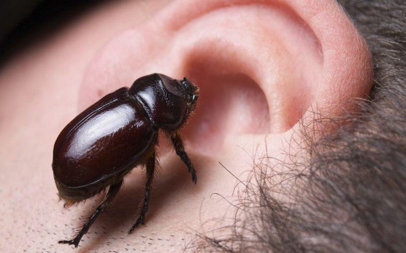 https: img-k.okeinfo.net content 2018 10 19 481 1966204 telinga-anak-zaskia-adya-mecca-kemasukan-semut-ini-bahaya-bisa-terjadi-vivpNYGwIo.jpg