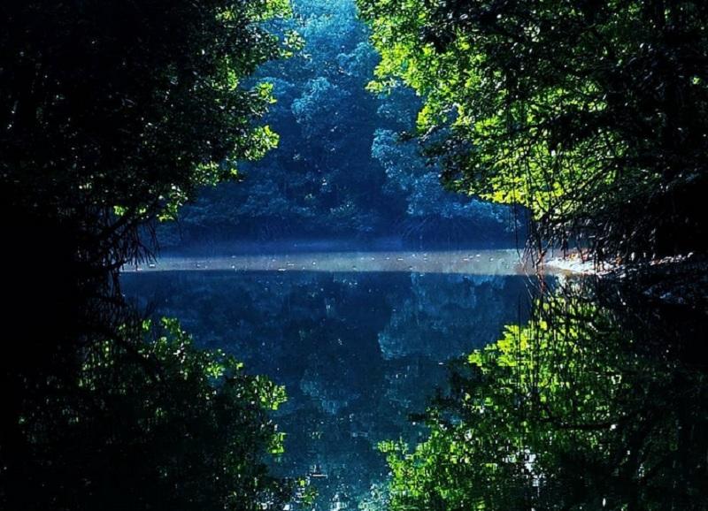 https: img-k.okeinfo.net content 2018 11 01 406 1972131 serunya-berpetualang-di-kalimantan-dari-keliling-mangrove-hingga-bertemu-buaya-PpKH1urwVj.jpg