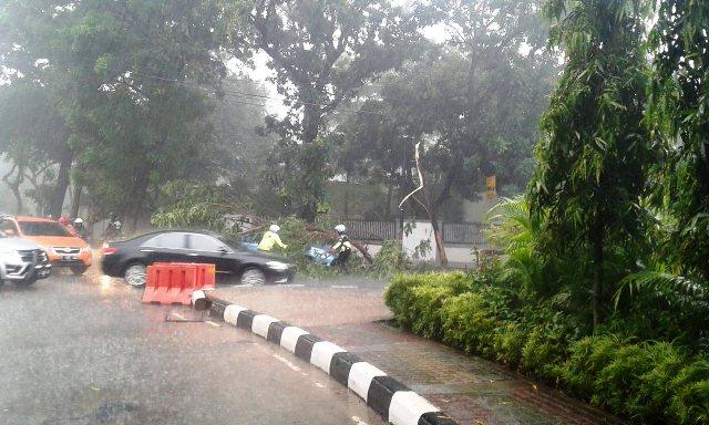 https: img-k.okeinfo.net content 2018 11 09 338 1975639 diguyur-hujan-pohon-tumbang-timpa-taksi-di-jaksel-Nk5O5CS9gI.jpg