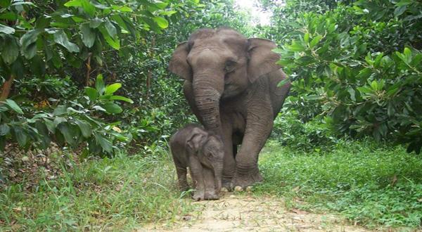https: img-k.okeinfo.net content 2018 11 19 340 1979904 habitat-kebanjiran-belasan-gajah-sumatera-masuk-perkebunan-warga-3VzwUrNk0A.jpg
