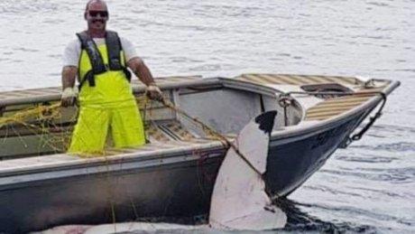 https: img-k.okeinfo.net content 2018 11 20 18 1980119 hiu-putih-4-6-meter-ditemukan-mati-di-pantai-sydney-australia-gvTsaa1FdE.jpg