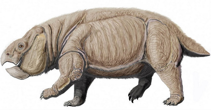 https: img-k.okeinfo.net content 2018 11 23 56 1981838 temuan-fosil-dinosaurus-mamalia-diyakini-hidup-250-juta-tahun-lalu-nL0fm67r92.jpg