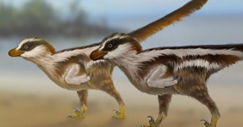 https: img-k.okeinfo.net content 2018 11 25 56 1982561 ditemukan-jejak-kaki-dinosaurus-berukuran-1-cm-f8l6nw8o3a.jpg
