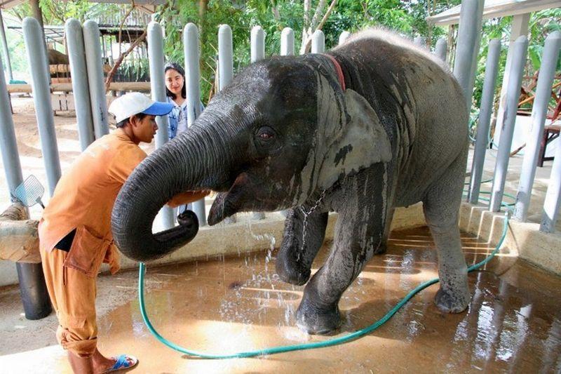 https: img-k.okeinfo.net content 2018 11 27 481 1983453 pertama-di-india-rumah-sakit-khusus-gajah-akhirnya-dibuka-qqj1MCTMC1.jpg