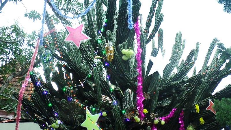 https: img-k.okeinfo.net content 2018 12 25 406 1995648 romantisme-pohon-natal-kaktus-raksasa-berusia-50-tahun-E1abnlwMrZ.jpg