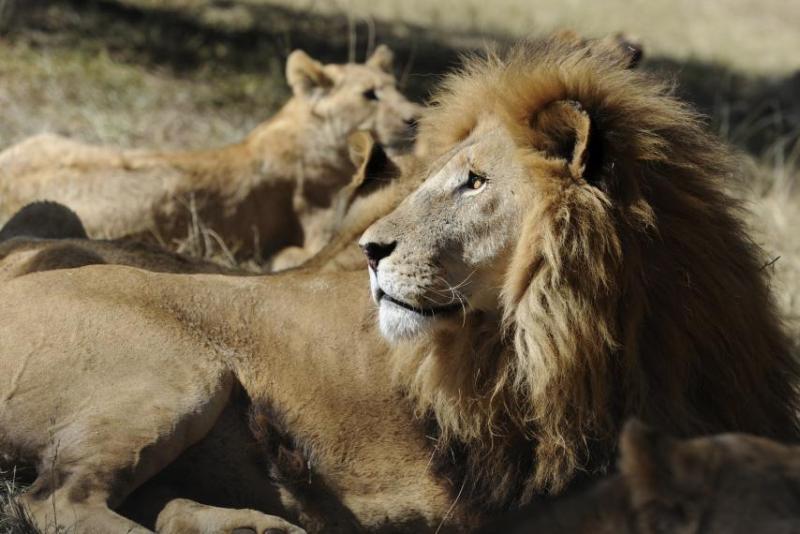 https: img-k.okeinfo.net content 2019 01 01 18 1998685 perempuan-pekerja-kebun-binatang-tewas-diterkam-singa-YbwQKMBUC0.jpg