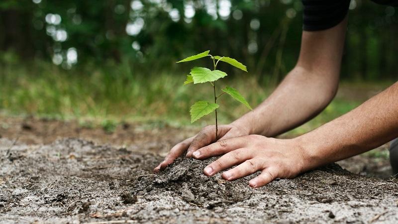 https: img-k.okeinfo.net content 2019 01 10 196 2002783 hari-sejuta-pohon-generasi-muda-harus-paham-pentingnya-peduli-lingkungan-LoAdxAGbs6.jpg