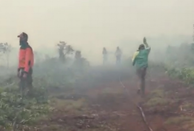 https: img-k.okeinfo.net content 2019 01 10 340 2002413 sepekan-66-hektare-hutan-dan-lahan-di-riau-hangus-terbakar-Rw0nNHlBrK.jpg