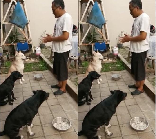 https: img-k.okeinfo.net content 2019 01 12 196 2003568 anjing-peliharaan-bisa-berdoa-sebelum-makan-bagaimana-cara-melatihnya-6Nd9QmLDcW.jpg