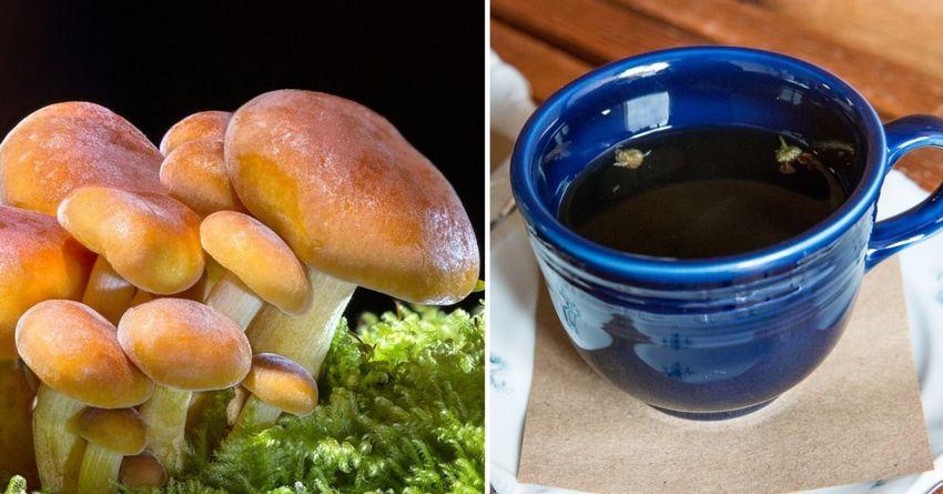 https: img-k.okeinfo.net content 2019 01 16 298 2005119 minum-kopi-dicampur-jamur-ini-khasiatnya-NwoG6zjFjQ.jpg
