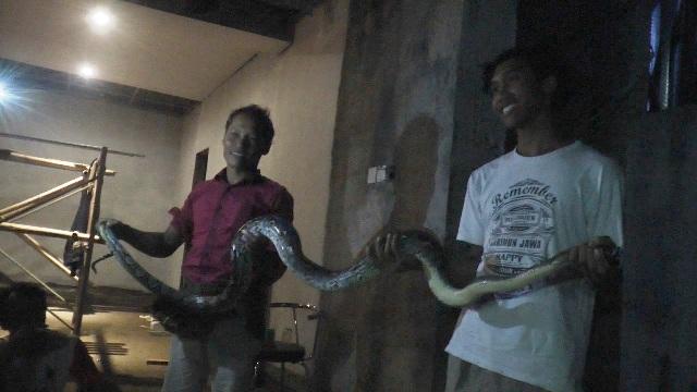 https: img-k.okeinfo.net content 2019 01 17 512 2005593 ular-piton-raksasa-masuk-ke-permukiman-warga-N1QzUWIct1.jpg