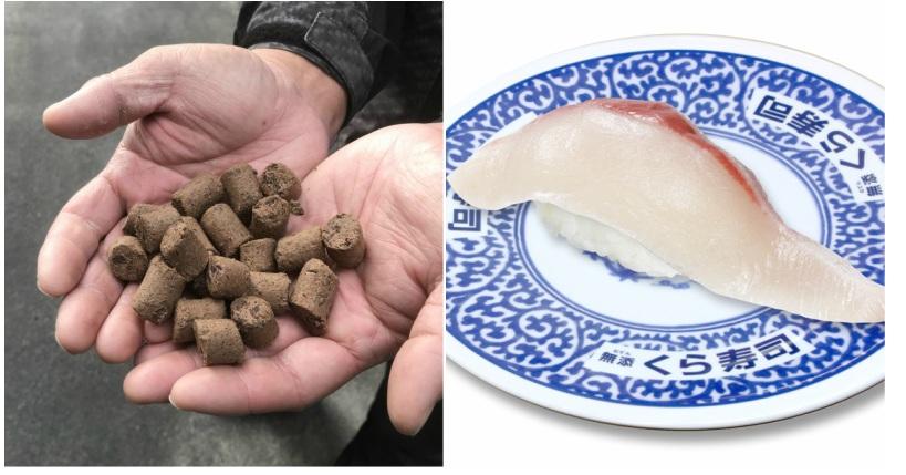 https: img-k.okeinfo.net content 2019 01 26 298 2009745 sushi-dari-ikan-yang-diberi-pakan-cokelat-gimana-rasanya-4E9he1Xb7r.jpg
