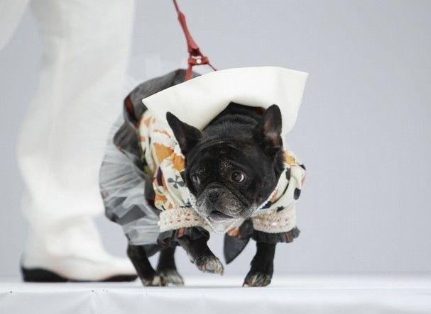 https: img-k.okeinfo.net content 2019 01 30 194 2011379 nyasar-di-catwalk-fashion-show-anjing-ini-jadi-pusat-perhatian-ojWIJ2lwuy.jpg