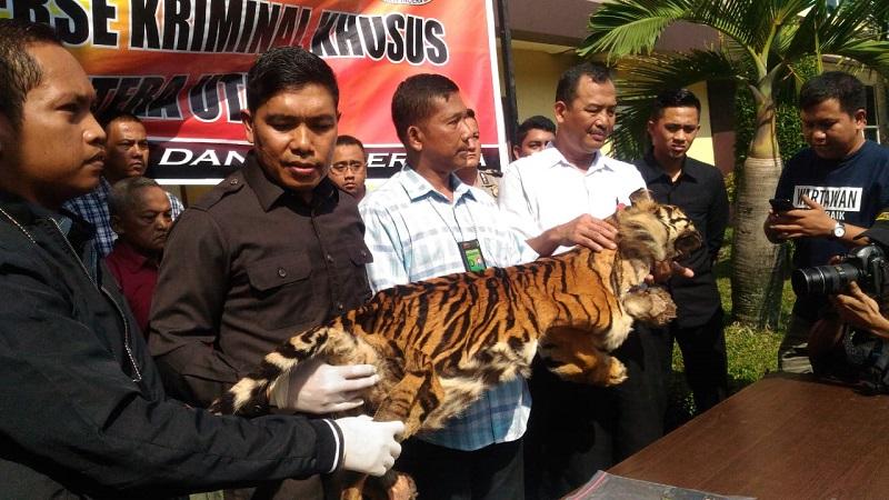 https: img-k.okeinfo.net content 2019 01 31 340 2011825 jual-kulit-harimau-sumatera-dan-macan-dahan-pria-paruh-baya-ditangkap-polisi-FZ5zj62jw6.jpeg