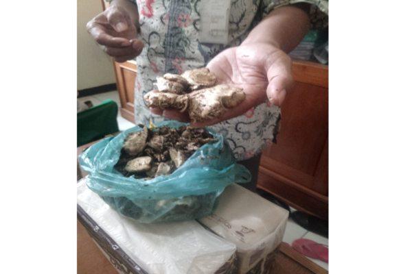 https: img-k.okeinfo.net content 2019 02 02 512 2012860 satu-keluarga-di-wonogiri-keracunan-jamur-kotoran-sapi-warganet-bisa-halusinasi-0FFaarg1Rw.jpg