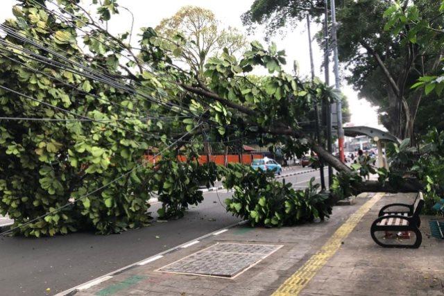 https: img-k.okeinfo.net content 2019 02 05 338 2014041 banyak-pohon-tumbang-imbas-angin-kencang-landa-jakarta-ini-jalan-yang-terdampak-AJkn91QoSv.jpg