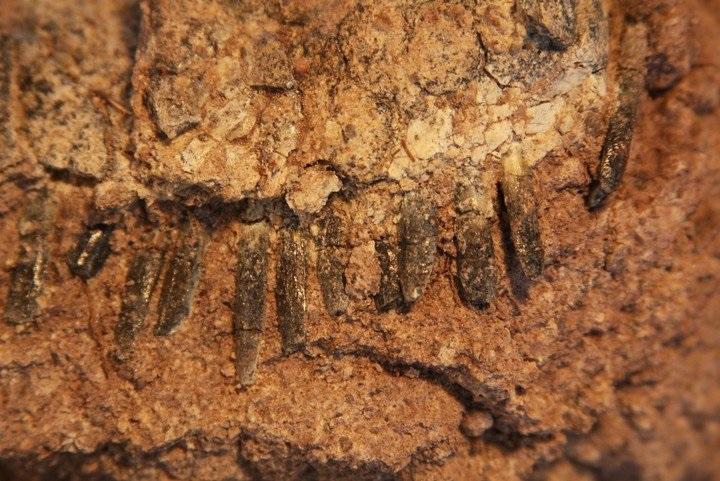 https: img-k.okeinfo.net content 2019 02 06 56 2014440 ilmuwan-teliti-fosil-dinosaurus-dengan-punggung-mohawk-5trU4IW0qC.jpg