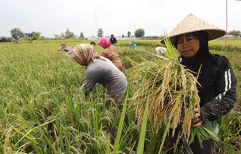 https: img-k.okeinfo.net content 2019 02 09 320 2015677 neraca-perdagangan-hasil-pertanian-surplus-usd10-miliar-pada-2018-7EWWC8Kc3D.jpg
