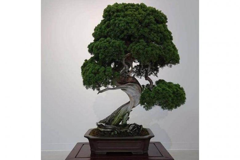 https: img-k.okeinfo.net content 2019 02 12 18 2016816 bonsai-berusia-400-tahun-dicuri-pemilik-kirim-pesan-untuk-malingnya-yhTfwSpyQn.jpg