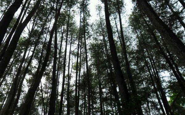 https: img-k.okeinfo.net content 2019 02 12 320 2017042 norwegia-hingga-as-bantu-bereskan-masalah-hutan-ri-qw6kZb3Ky1.jpg