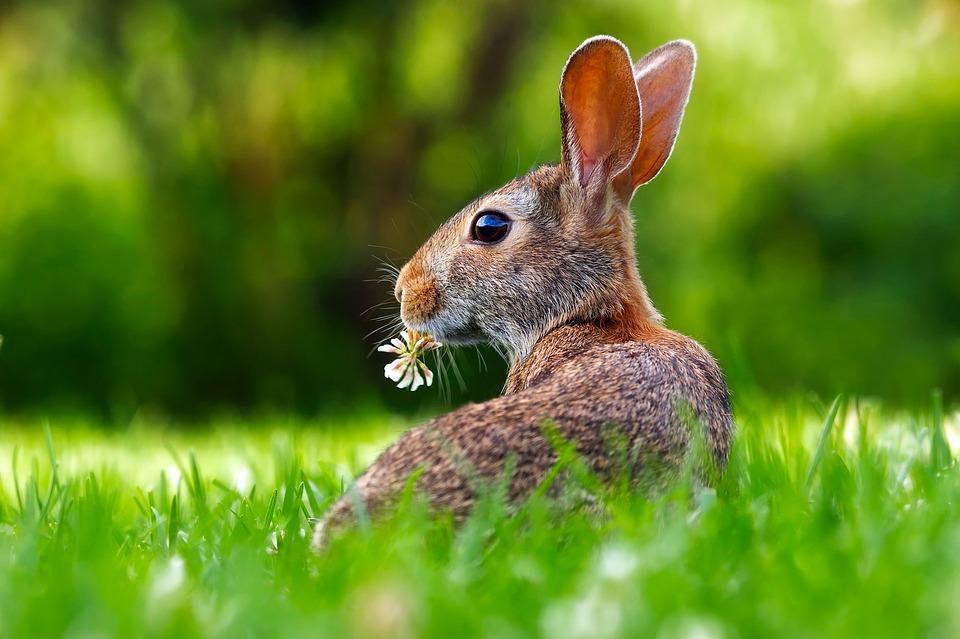 https: img-k.okeinfo.net content 2019 02 13 406 2017176 ibarat-junkfood-wortel-ternyata-bahaya-untuk-kelinci-q1pge6wIbB.jpg