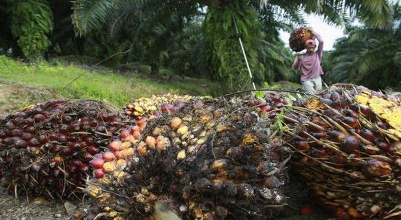 https: img-k.okeinfo.net content 2019 02 14 320 2017765 industri-kelapa-sawit-perlu-bentuk-koalisi-berkelanjutan-pSiZrJpUon.jpg