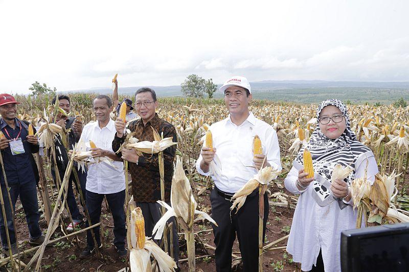 https: img-k.okeinfo.net content 2019 02 15 320 2018312 menteri-amran-saksikan-banjir-jagung-di-tuban-JYPSdfDtbU.jpg