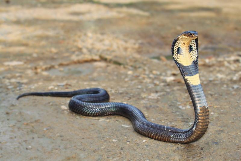 https: img-k.okeinfo.net content 2019 02 18 340 2019615 warga-digegerkan-dengan-penemuan-ular-kobra-sepanjang-1-meter-di-dalam-mesin-cuci-HPjyoUPFeS.jpg