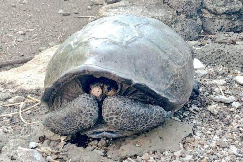 https: img-k.okeinfo.net content 2019 02 20 18 2020593 diduga-sudah-punah-seabad-lalu-spesies-kura-kura-raksasa-ditemukan-di-galapagos-BSt8d6nHxG.jpg
