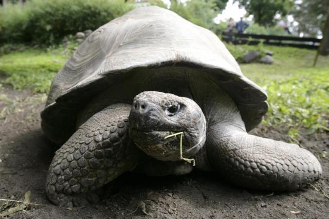 https: img-k.okeinfo.net content 2019 02 21 18 2021174 kura-kura-yang-dikira-punah-terlihat-di-kepulauan-galapagos-y5ugIRhcug.jpg