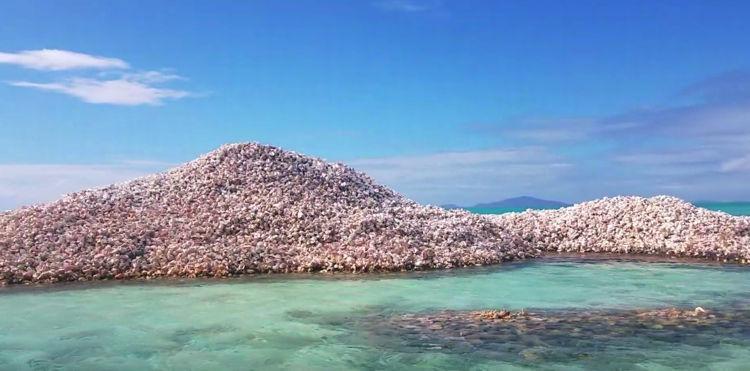 https: img-k.okeinfo.net content 2019 02 28 406 2023940 cantik-pulau-ini-terbuat-dari-cangkang-cangkang-siput-ratusan-tahun-EImBI7A4fz.jpg