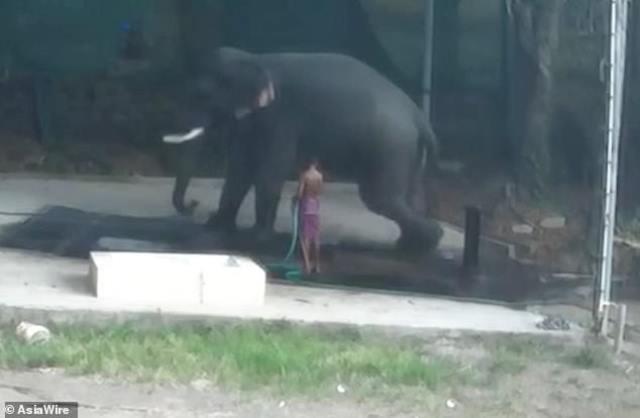 https: img-k.okeinfo.net content 2019 03 04 18 2025796 pria-india-tewas-diduduki-gajah-vuE7pwGoT5.jpg